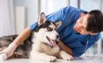 В Украине заработал сервис по поиску домашних животных